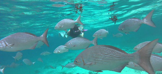 Cozumel Diving Reef Guide