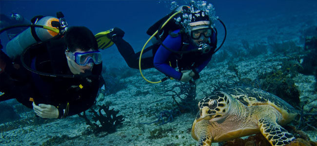 Reefs of Cozumel Dive Trips